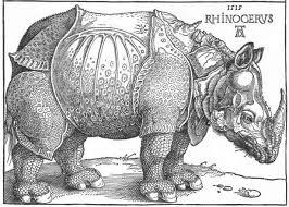 Durero rino